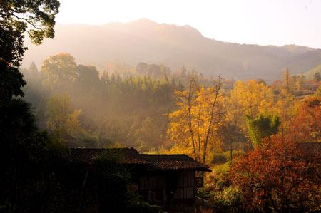 Beautiful autumn leaves in Fujian